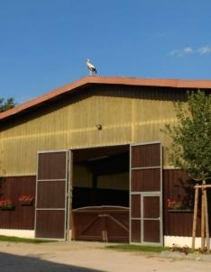 Storch zu Besuch